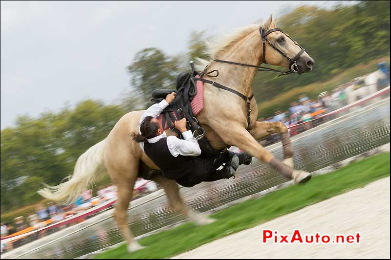 Chantilly Art et Elegance, Spectacle Equestre